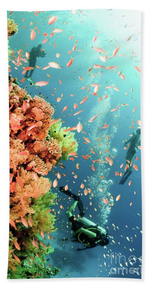 Scuba Bath Sheet featuring the photograph Coral Reef by Hagai Nativ