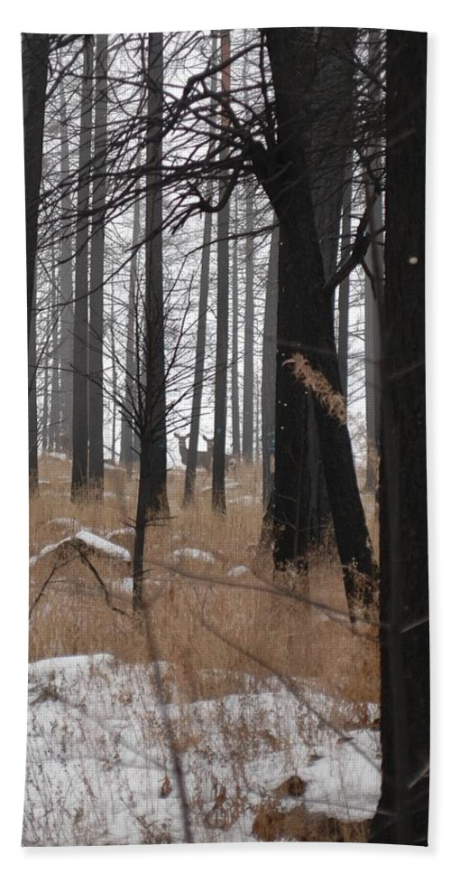Trees Hand Towel featuring the photograph 2 Deers by Sara Stevenson