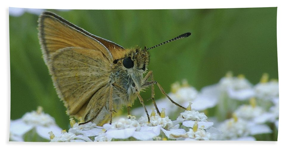 White Flowers Hand Towel featuring the photograph Dion Skipper Yarrow Blossoms by Michael Peychich