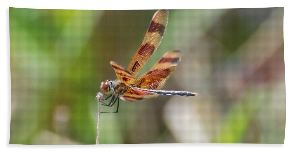Nature Bath Sheet featuring the photograph Dragon Fly by Rob Hans