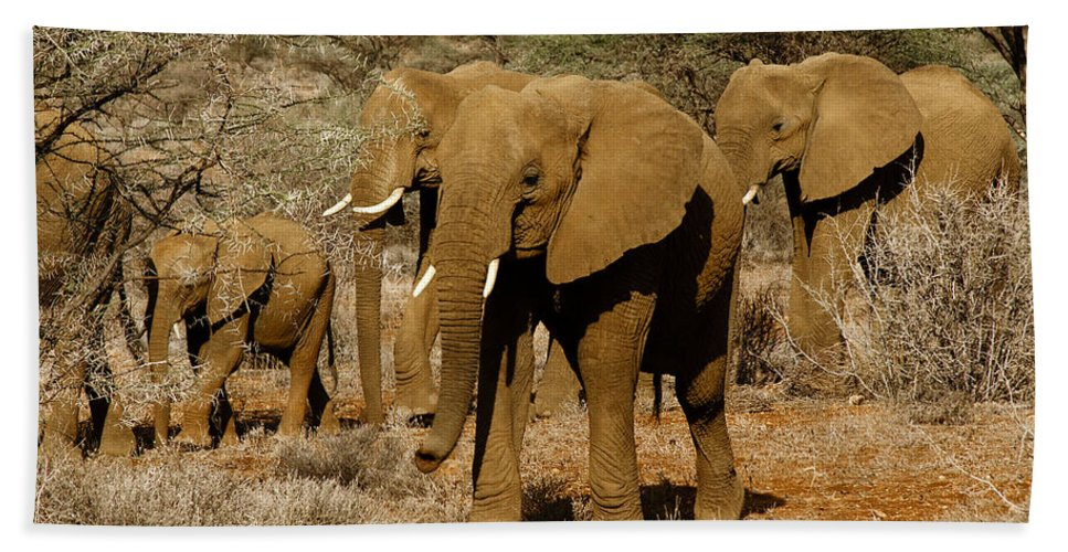 Africa Hand Towel featuring the photograph Elephant Parade by Michele Burgess
