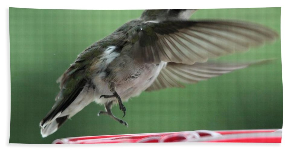Mccombie Bath Sheet featuring the photograph Female Ruby-throated Hummingbird by J McCombie