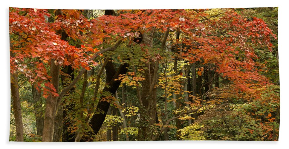 Autumn Hand Towel featuring the photograph Forest In Autumn by Michele Burgess