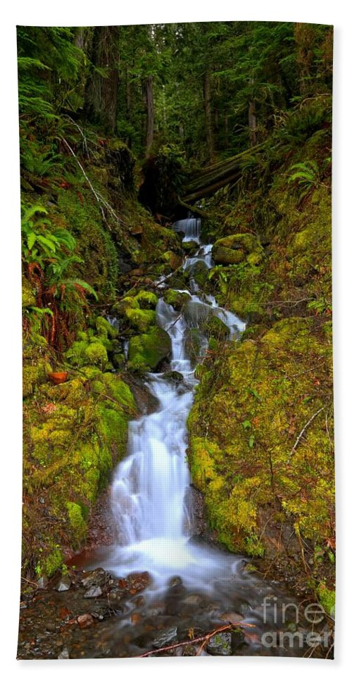 Olympic National Park Hand Towel featuring the photograph Streaming In The Olympic Rainforest by Adam Jewell