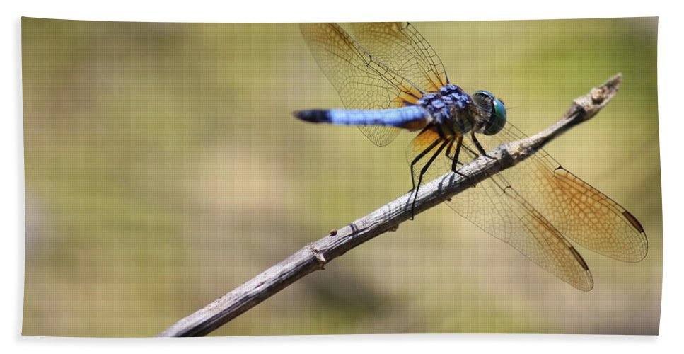 Dragonfly Bath Sheet featuring the photograph Golden Wings by Carol Groenen