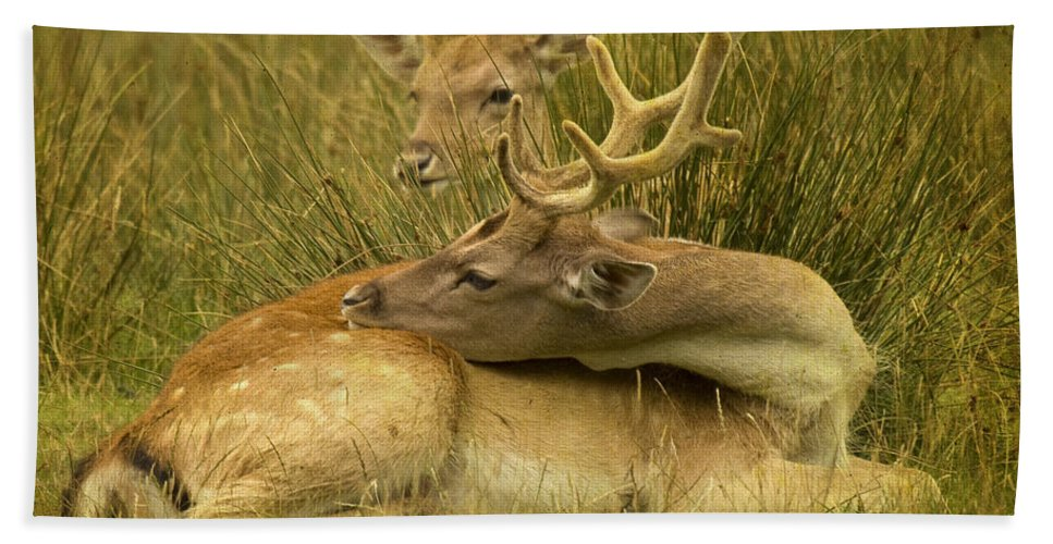 Fallow Deer Bath Towel featuring the photograph Having A Rest by Angel Ciesniarska