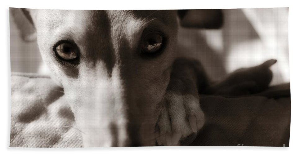 Editorial Bath Sheet featuring the photograph Heart You Italian Greyhound by Angela Rath