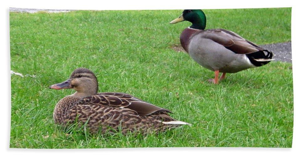 New Zealand Hand Towel featuring the photograph New Zealand - Pair Of Mallard Duck by Jeffrey Shaw