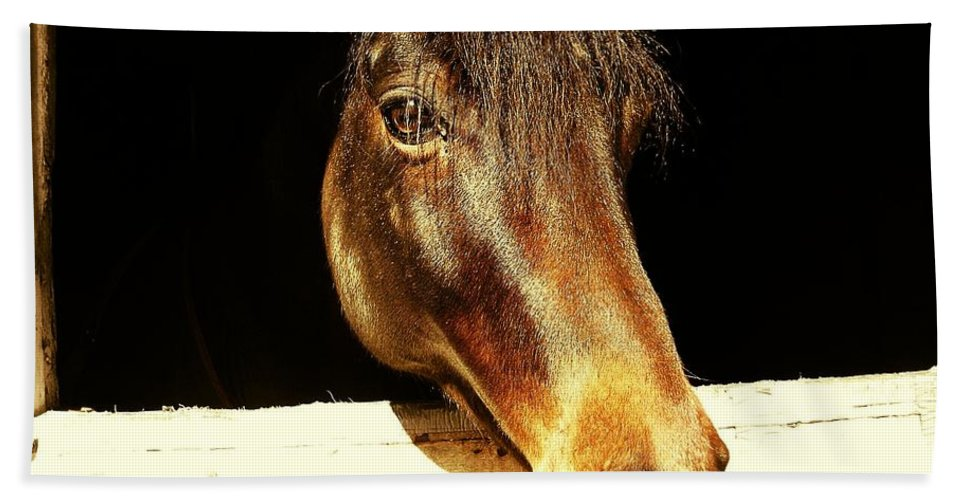 Equine Bath Sheet featuring the photograph Noble Stallion by JAMART Photography
