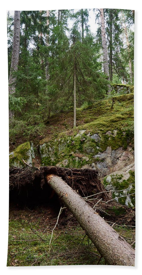 Finland Bath Sheet featuring the photograph Old Forest In Kauppi Tampere by Jouko Lehto