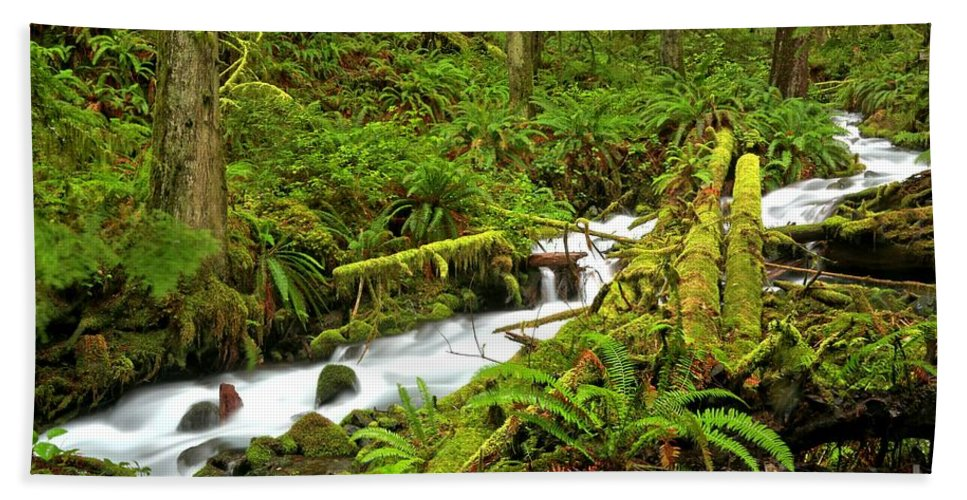Rainforest Hand Towel featuring the photograph Olympic Tranquility by Adam Jewell