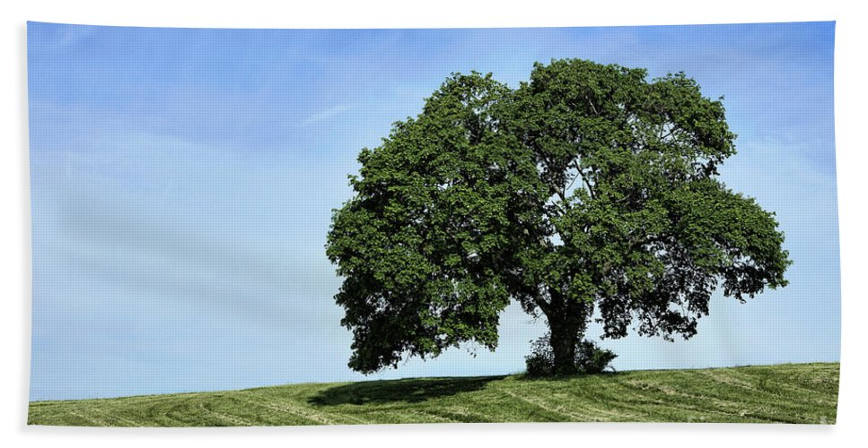 Chester County Hand Towel featuring the photograph One Tree Hill by John Greim