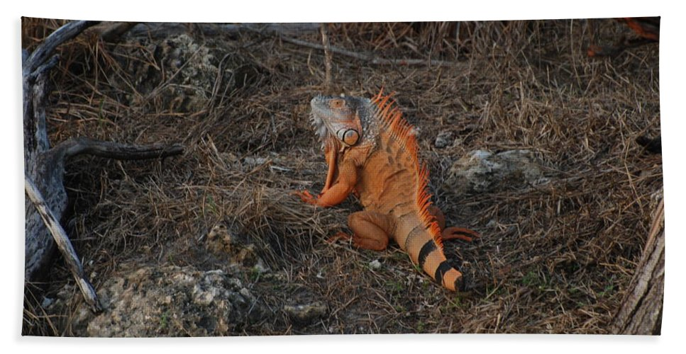 Brush Hand Towel featuring the photograph Orange Iguana by Rob Hans