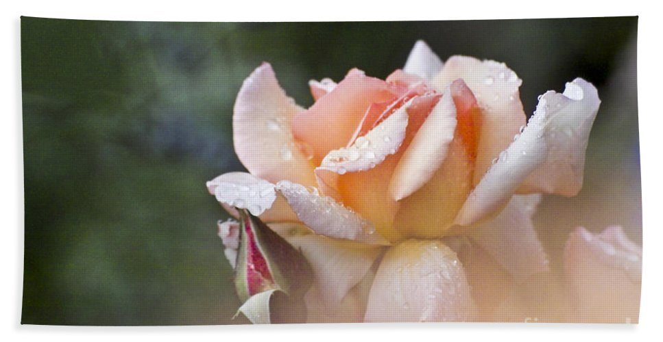 Rose Bath Sheet featuring the photograph Pink Rose by Heiko Koehrer-Wagner