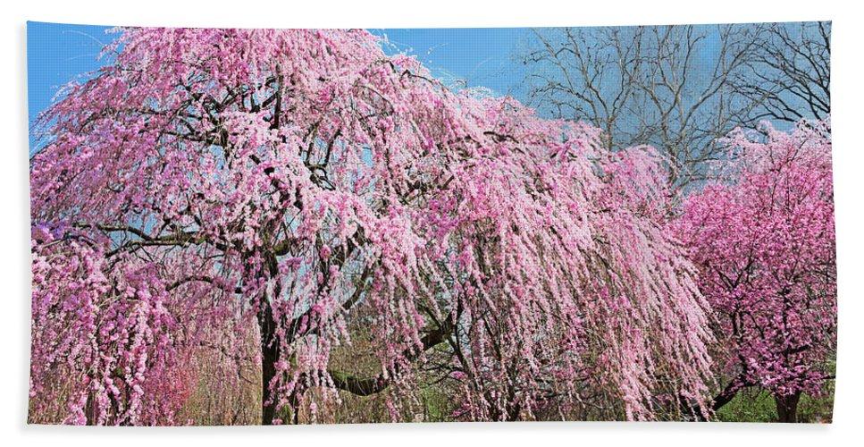 Pink Weeping Cherry Tree In Bloom Hand Towel For Sale By Regina