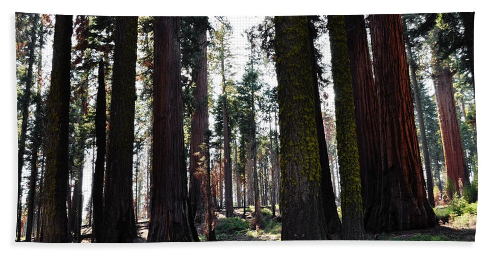 Sequoia National Park Bath Sheet featuring the photograph Sequoia National Park by Kyle Hanson