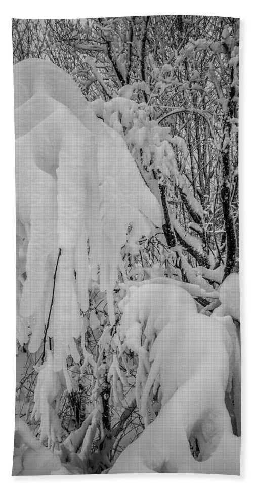 Winter Bath Sheet featuring the photograph Snow Covered Trees In The North Carolina Mountains During Winter by Alex Grichenko