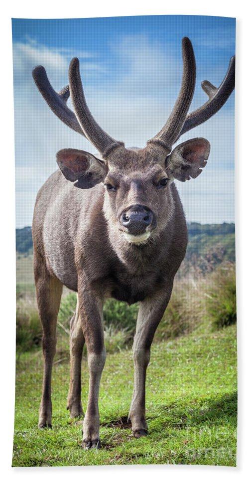 Deer Bath Sheet featuring the photograph Sri Lankan Sambar Deer Male by MotHaiBaPhoto Prints