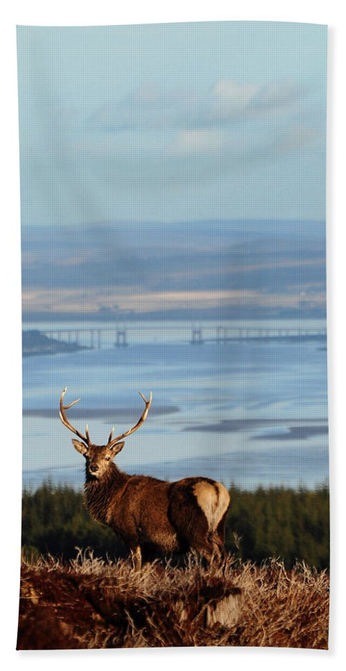 Stag Hand Towel featuring the photograph Stag Overlooking The Beauly Firth And Inverness by Gavin Macrae