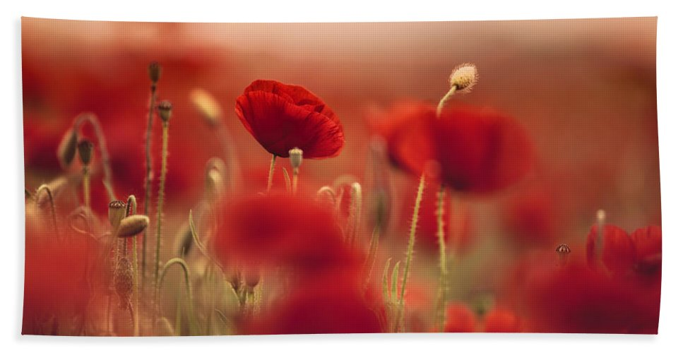 Poppy Bath Towel featuring the photograph Summer Poppy Meadow by Nailia Schwarz