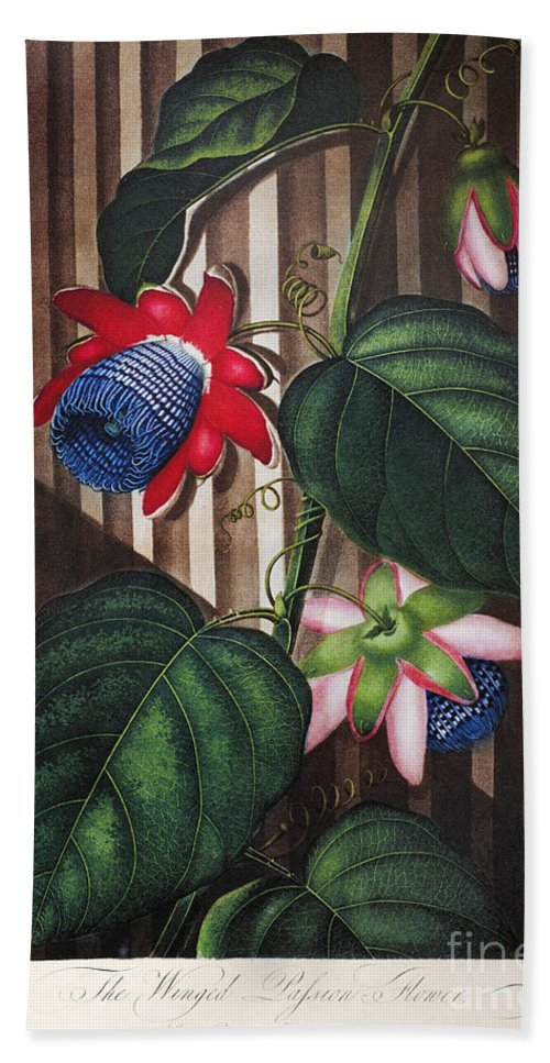 1802 Hand Towel featuring the photograph Thornton: Passion-flower by Granger