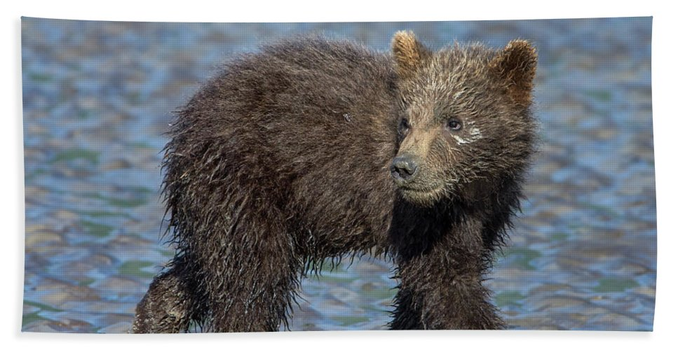 Grizzly Bear Bath Sheet featuring the photograph Watching by Claudia Kuhn
