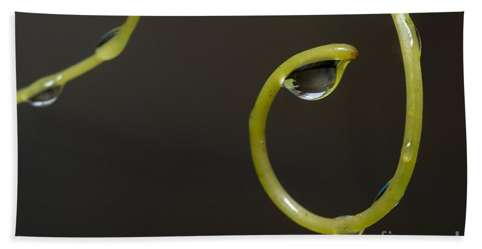 Grapevines Hand Towel featuring the photograph Waterdrops Catch By Grapevines by Compuinfoto