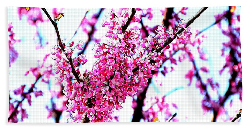 Redbud Hand Towel featuring the photograph 2016-03-18 Redbud Tree In Bloom by Ericamaxine Price