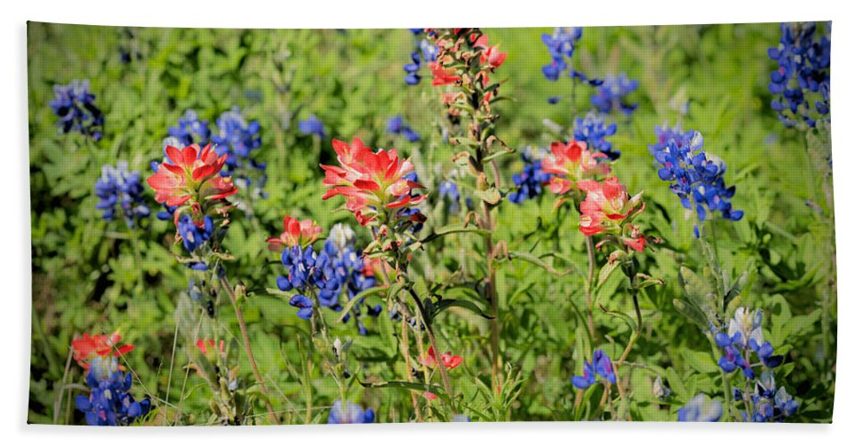 Early Morning; Spring; Texas; Hill Country; 2017; 2010s; March; Texas Bluebonnets; Wild Flowers; Indian Paint Brush; Blooms; Blossoms; Flowers; Central Texas Hill Country; Castilleja Indivisa; Lupinus Texensis; Aspect Ratio 2:3; Format 2:3; Color Images; Color Photo; Color Photograph; Color Pictures; Horizontal Format; Orientation Landscape Hand Towel featuring the photograph 201703300-068 Indian Paintbrush Blossom 2x3 by Alan Tonnesen