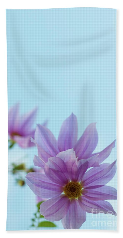 Asia Hand Towel featuring the photograph Fully Bloomed Pink Dahlia Imperialis At Garden In November by Eiko Tsuchiya