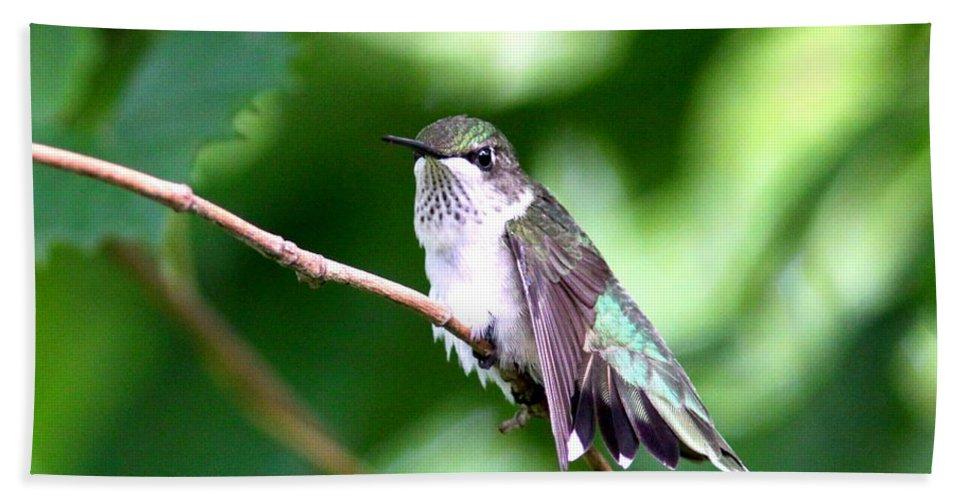 Hummingbird Bath Sheet featuring the photograph 2757 - Hummingbird by Travis Truelove