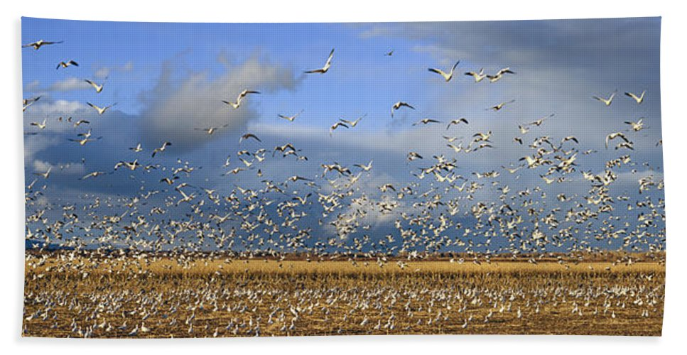 Photography Bath Sheet featuring the photograph A Panoramic Of Thousands Of Migrating by Panoramic Images