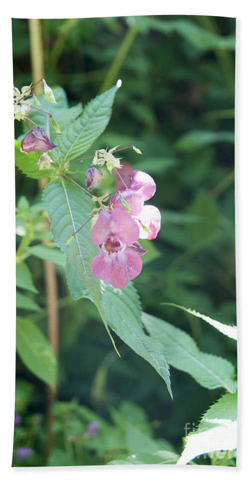 Pink Hand Towel featuring the photograph Alpine Wildflower by Ilan Rosen