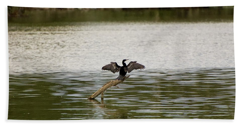 A. Anhinga Bath Sheet featuring the photograph Anhinga by Rich Leighton
