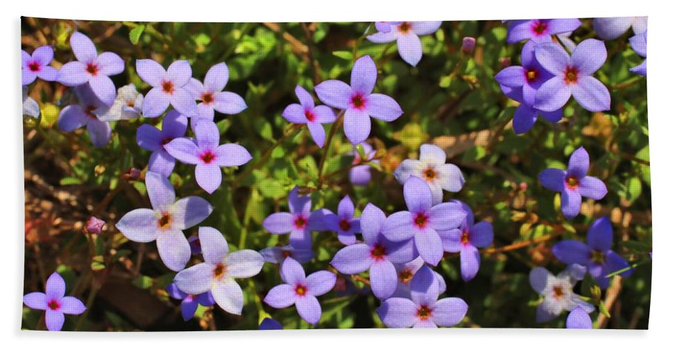 Bluets Hand Towel featuring the photograph Bluets by Kathryn Meyer