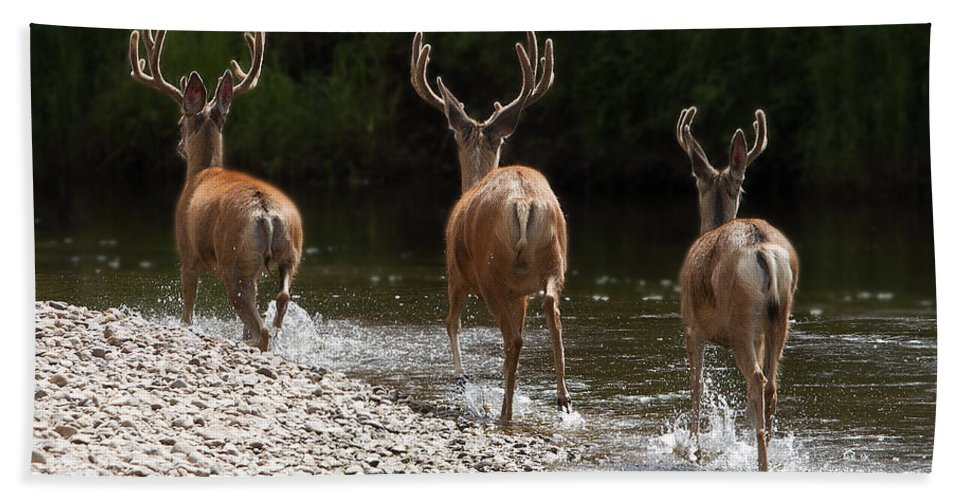 Wildlife Hand Towel featuring the photograph 3 Bucks by Russell Smith