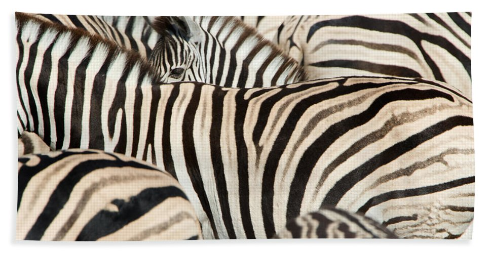 Photography Bath Sheet featuring the photograph Burchells Zebras Equus Quagga by Panoramic Images