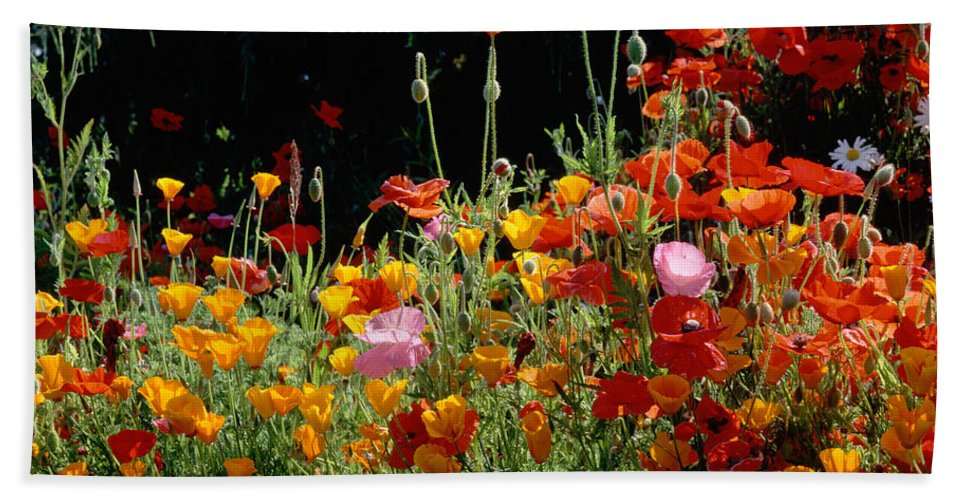 Photography Bath Sheet featuring the photograph California Golden Poppies Eschscholzia by Panoramic Images
