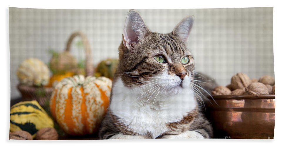 Cat Bath Towel featuring the photograph Cat And Pumpkins by Nailia Schwarz