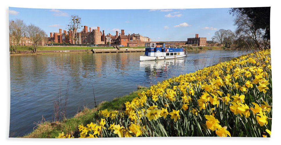 Daffodils Beside The Thames At Hampton Court London Uk Hand Towel featuring the photograph Daffodils Beside The Thames At Hampton Court London Uk by Julia Gavin