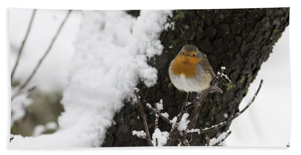 Survival Hand Towel featuring the photograph European Robin Erithacus Rubecula by Alon Meir