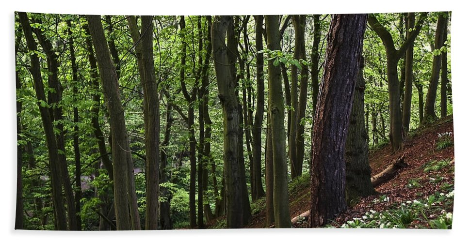 Branches Bath Sheet featuring the photograph Forest by Svetlana Sewell