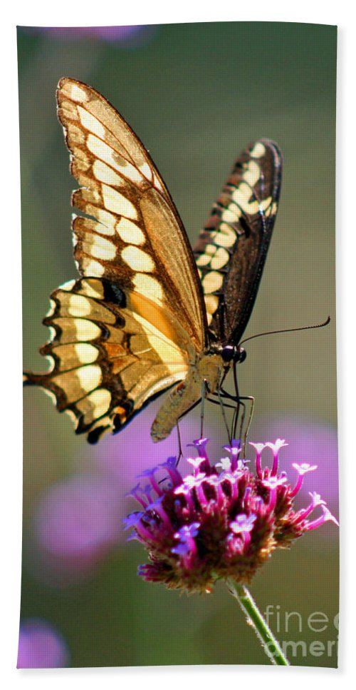 Giant Hand Towel featuring the photograph Giant Swallowtail Butterfly by Karen Adams