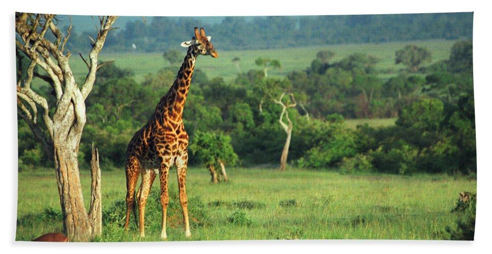Giraffe Hand Towel featuring the photograph Giraffe by Sebastian Musial