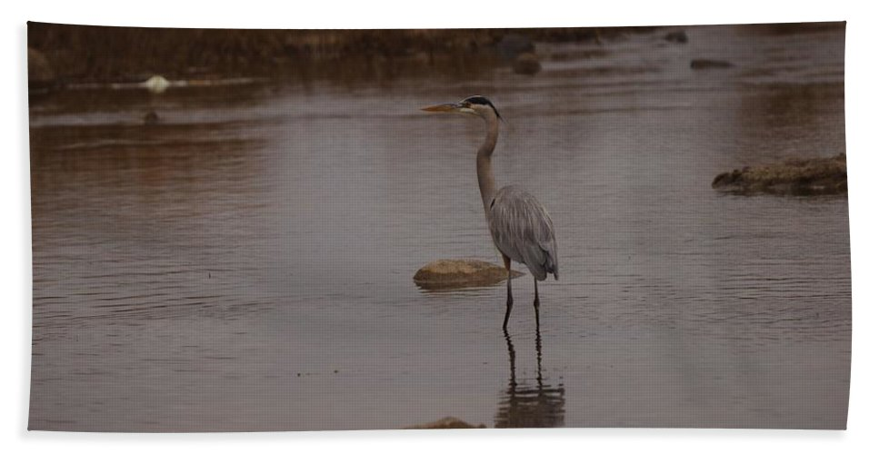Great Hand Towel featuring the photograph Great Blue Heron by James Smullins