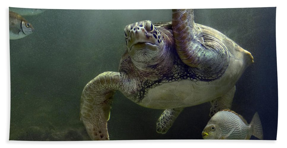 Mp Hand Towel featuring the photograph Green Sea Turtle Chelonia Mydas by Tim Fitzharris