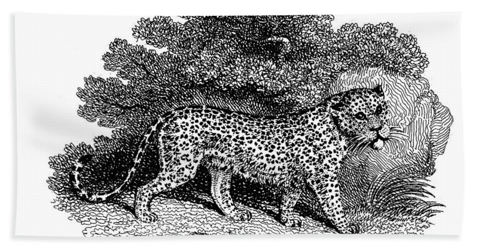 1800 Bath Sheet featuring the photograph Leopard by Granger