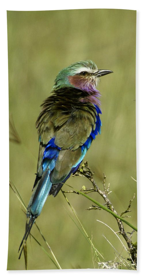 Africa Hand Towel featuring the photograph Lilac-breasted Roller by Michele Burgess