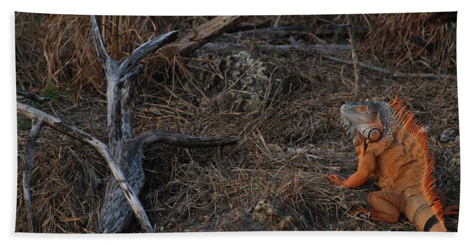 Branches Hand Towel featuring the photograph Orange Iguana by Rob Hans
