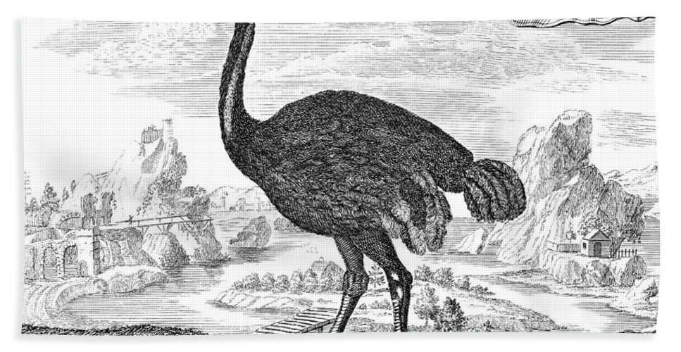 18th Century Bath Sheet featuring the photograph Ostrich by Granger